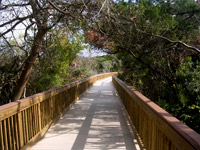 Hammock Park Boardwalk